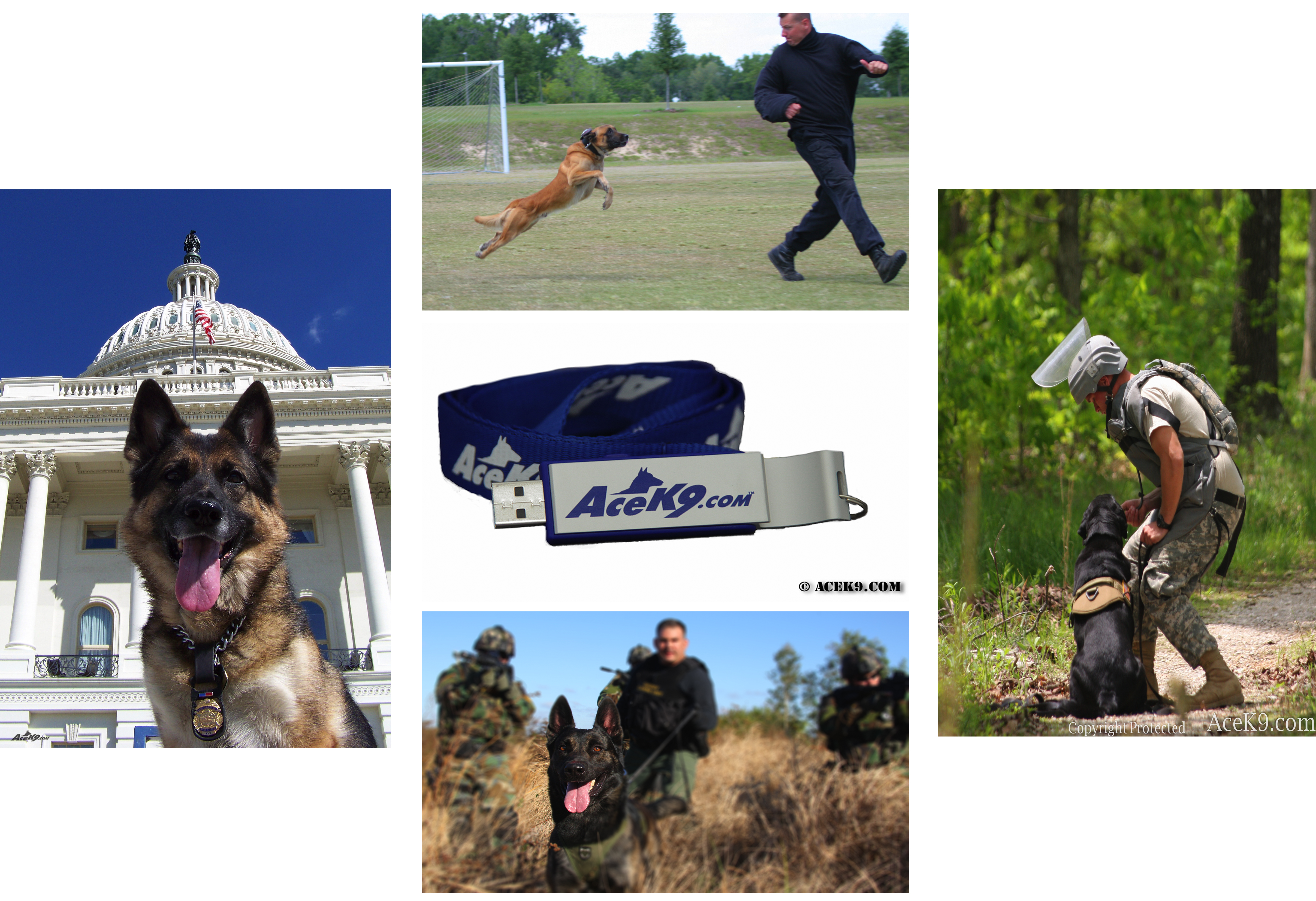 K9 Event Photo Collage